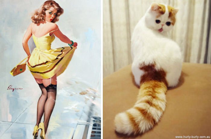 1540994680.cats_posing_like_pin_up_girls